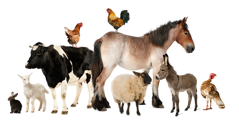 animal_health_care