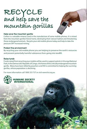mountain-gorilla