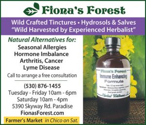 Fiona forest