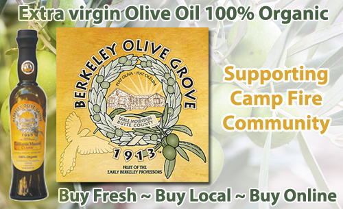 Berkeley Olive Grove where you can find the worlds best olive oil