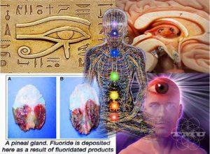 Pineal Gland-third eye