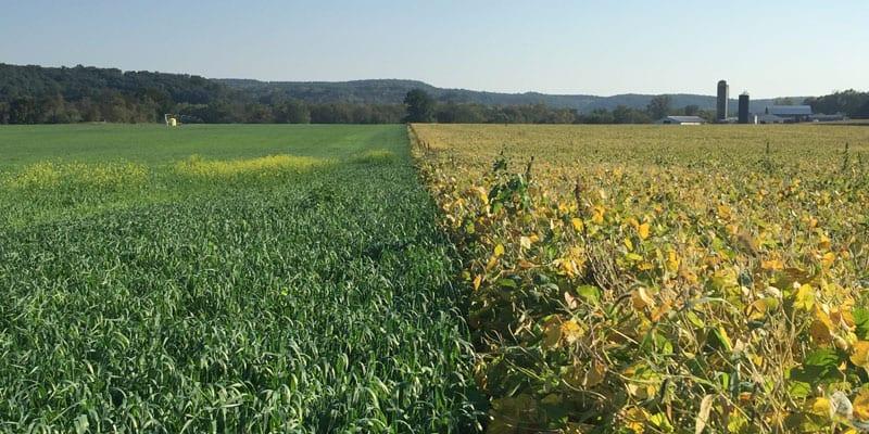 Regenerative agriculture-2